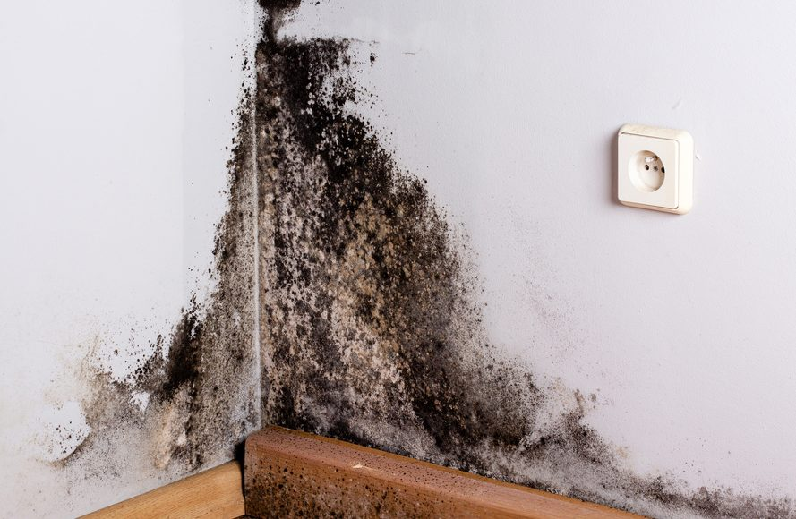 black mold is the most dangerous mold for your home